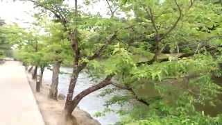 http://www.jow.jp/fuga/ フーガのフウちゃん http://ameblo.jp/takefug...
