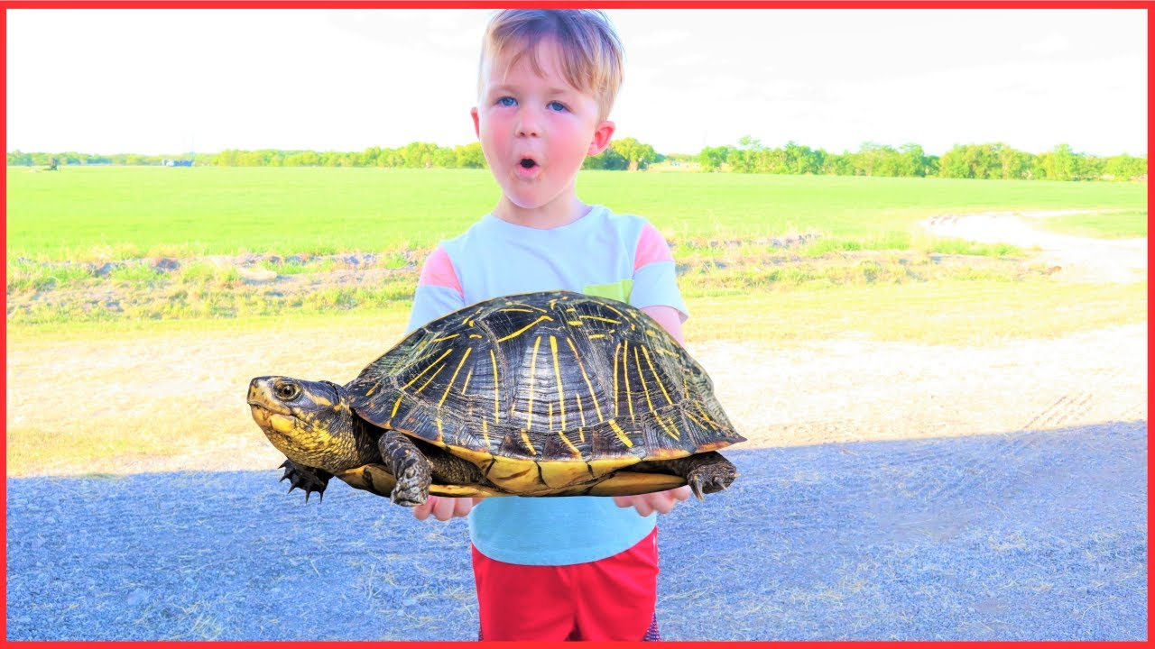 We found a turtle | Playing on the farm with tractors for kids