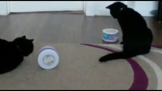 Zazzles enjoying her new toy 😄😂