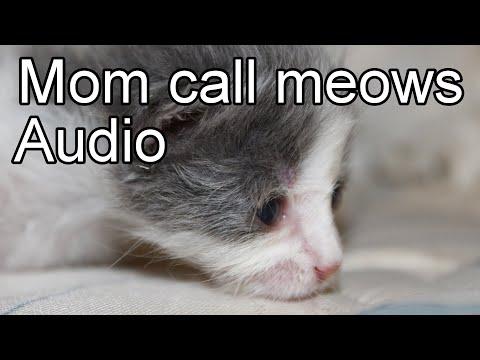 Kitten meows sound effect. Black screen. Newborn cat calling mom.