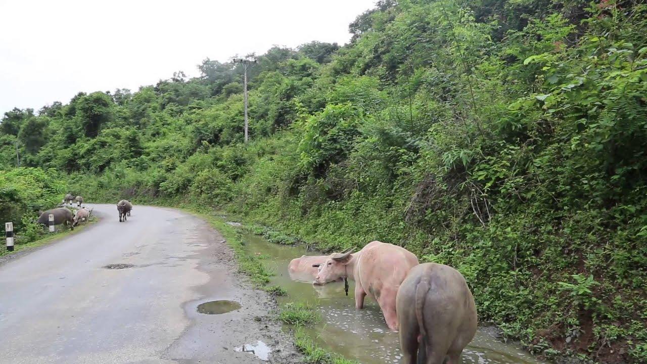 Trajet dans la jungle du Laos / Drive in the jungle of ...