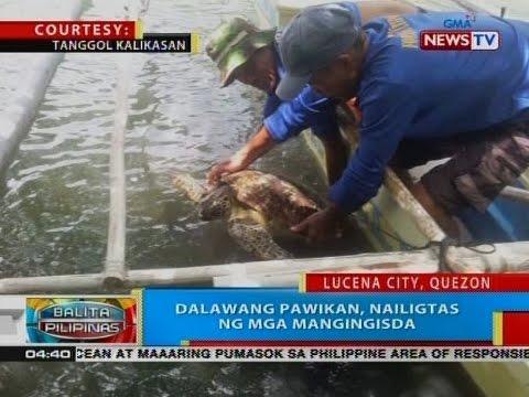 BP: Dalawang pawikan, nailigtas ng mga mangingisda