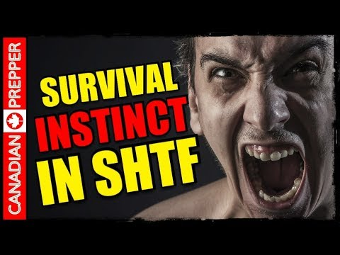 Warning: SHTF Reality Check