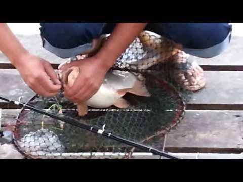 บ่อตกปลาไผ่เงิน บ่อตกปลาย่านฝั่งธนฯ ในซอยจรัลสนิทวงศ์ 13