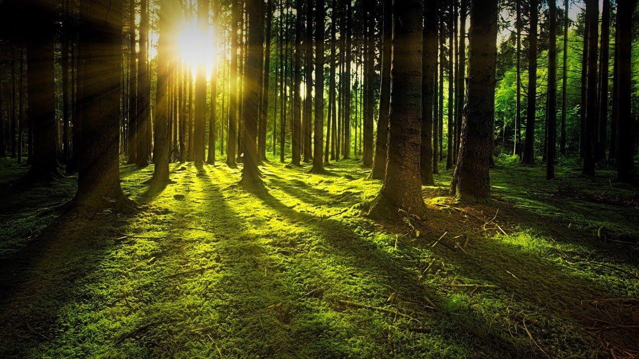 Fondo De Pantalla De Bosque Con Sonidos De La Naturaleza Con Lluvia 4k Youtube