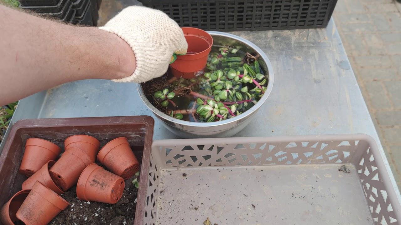 Лучший способ обработки новых растений от болезней и вредителей