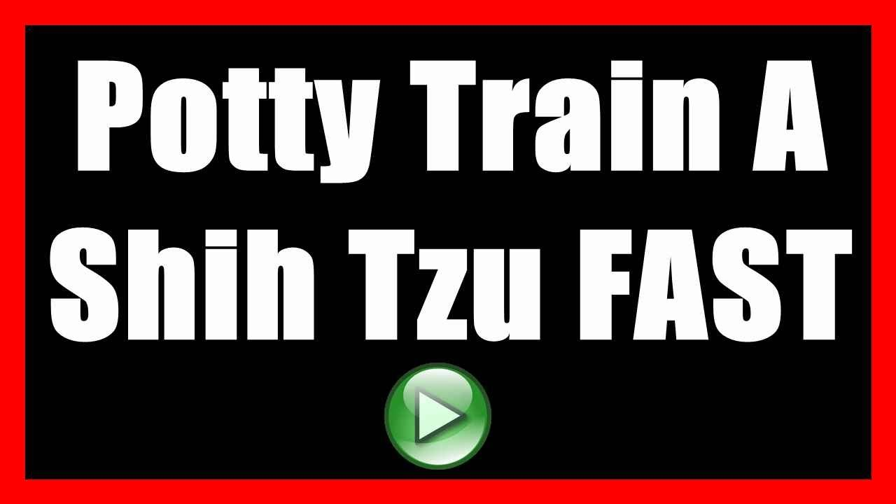 how to potty train a shih tzu to not poop indoors | house train a