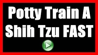 How To Potty Train A Shih Tzu To NOT Poop Indoors | House Train A Dog To Go Outside