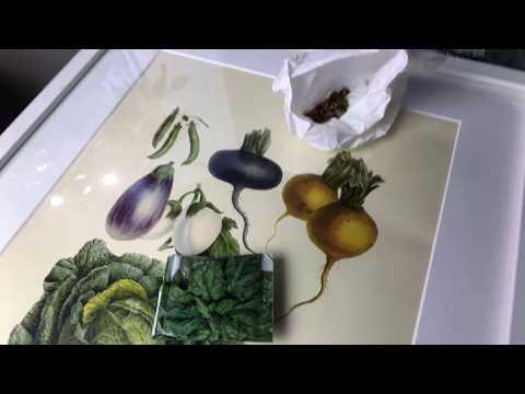 Försådd 12 odlade grödor jag ALDRIG skulle förså inomhus