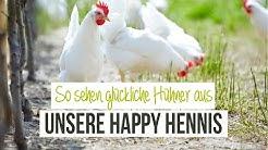 Unsere happy Hennis 🐥 So sehen glückliche Hennen aus! 😍