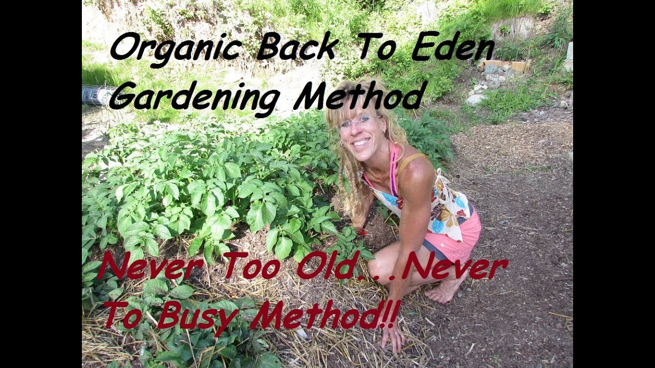 Growing a Back To Eden Garden with Wood Chips: A Method That works ...