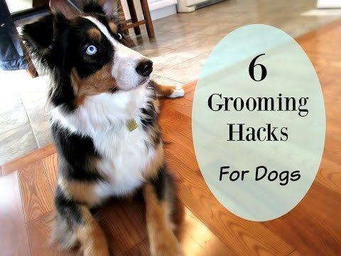Six Grooming Hacks for Dog Owners