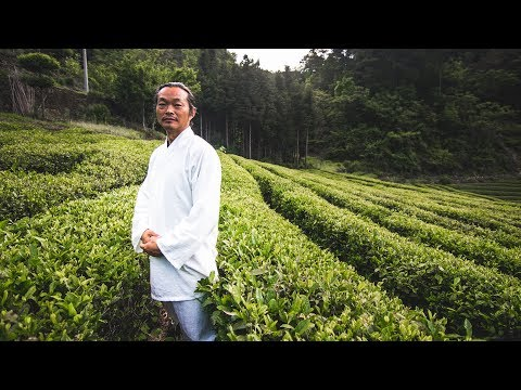 Chinese Green Tea: How it's made, with Master Gu