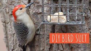 DIY: Make Your Own Suet for Birds