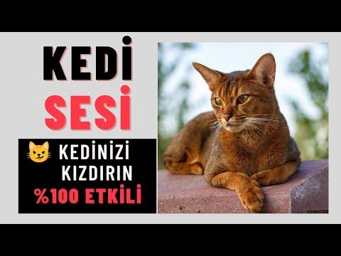 GERÇEK KEDİ SESİ, KEDİNİZİ ÇILDIRTIN, Cat Meow Sound