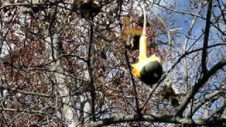 Gourds Up A Tree: Natural Decorations