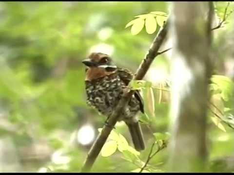Natuurreservaten van Suriname - Coesewijne