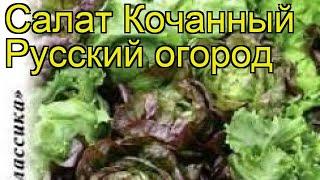 Салат кочанный Русский огород. Краткий обзор, описание характеристик lactuca sativa