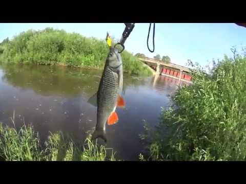 Крупный голавль малой реки и не только на кренки Kosadaka. Уклейка на спиннинг + щука.