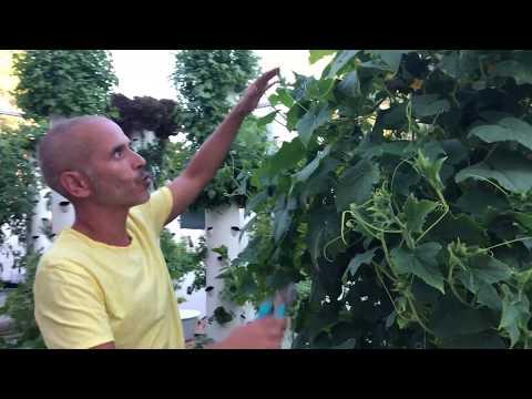 Tower Farm | Ibiza Farm