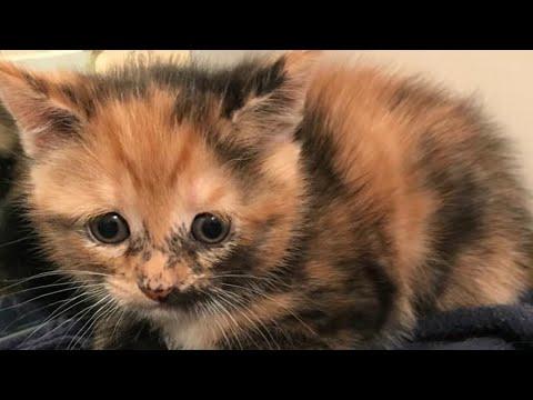 Маленькие котята ищут новый дом.