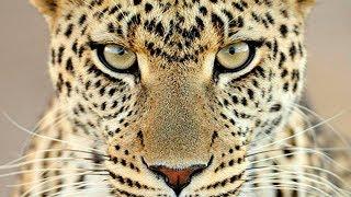 10 Животных, Которых Считали Вымершими