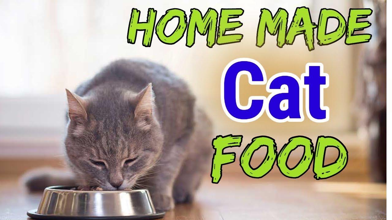 Cat Food Homemade Raw Cat Food Hindi Urdu 2019 Youtube