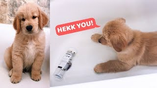 My Puppy is Scared of Shampoo Bottle
