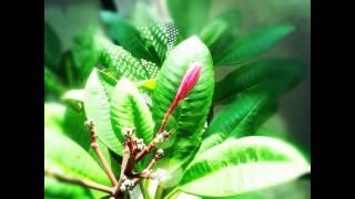 #flores#flora#flower#flowerslovers#flowermagic#nature#natgeoru#garden#naturaleza#nice#fleur#pictur