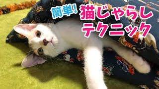 猫 #子猫 #ぽてと #cat #kitten 最近ちょっと猫じゃらしに飽きてきたぽ...