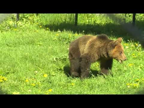 RIKU's new life in DANCING BEARS PARK Belitsa
