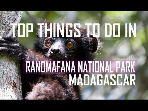 Top Things To Do in Ranomafana National Park, MADAGASCAR - Madagascar Travel Guide