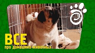 Клетка Для Собак: Какая И Для Чего. Все О Домашних Животных