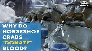 Horseshoe Crab Blood Saves Lives