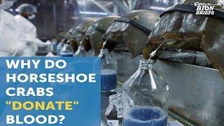 Horseshoe Crab Blood Saves Lives