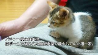 警戒心のかけらもない子猫を拾ってきたんだが thumbnail