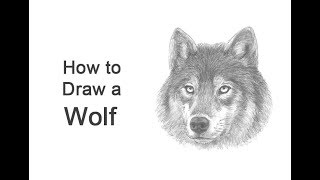 Easy How To Draw A Wolf Head