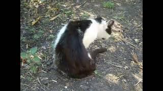 Блохастый кот