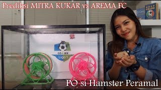 Download Video Prediksi MITRA KUKAR VS AREMA FC bersama PO si Hamster MP3 3GP MP4
