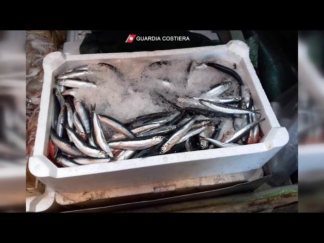 Controlli per la tracciabilità del pesce