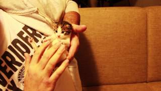 Kedi Tera-pisi