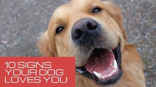10 Signs Your Dog Loves You