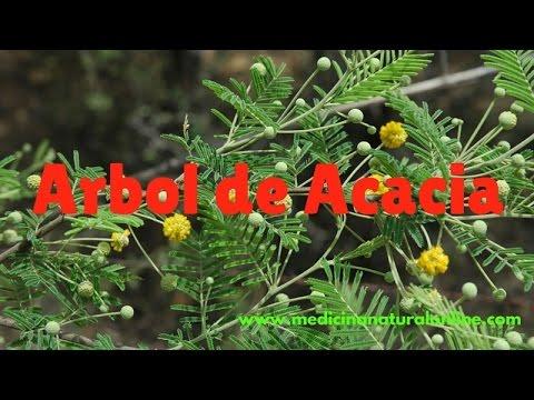 Arbol De Acacia Infeccionesvias Respiratorias Digestivas