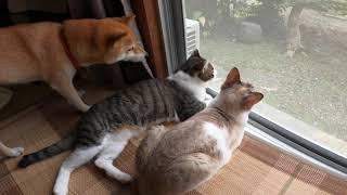 猫に狩られて金鳥マークになってしまった風鈴