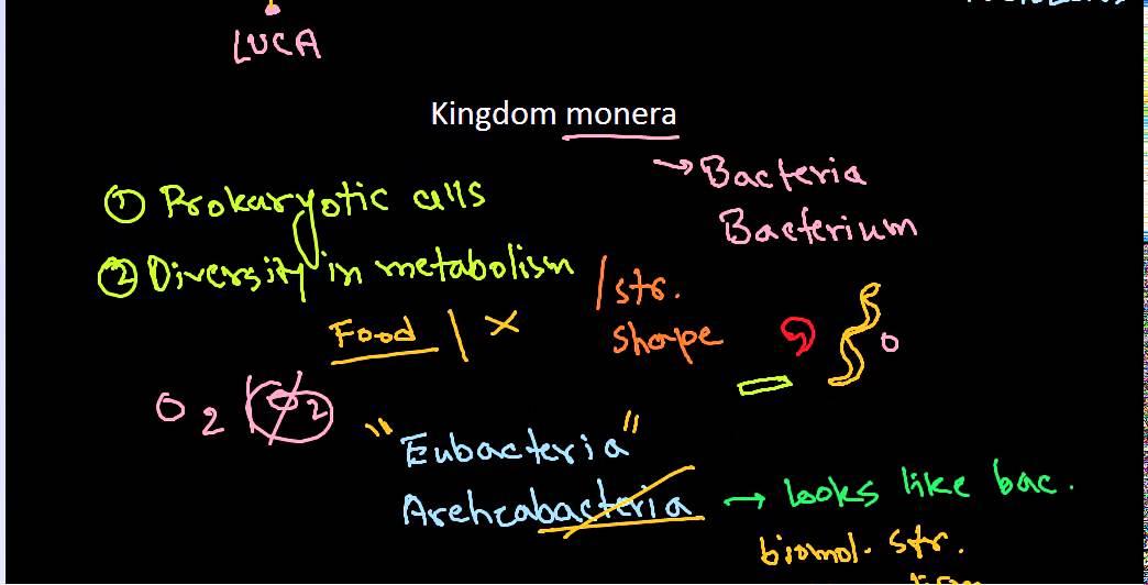 NCERT biology class 11 Kingdom monera CBSE class 11