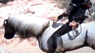 Eu achei o cavalo branco lucas