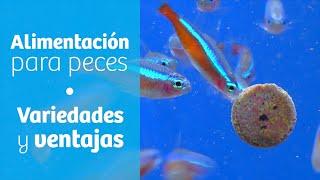 Alimentación para peces · Variedades y ventajas 🍴