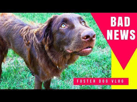 Foster Dog Vet Visit: Surgery?? + Tips If Your Dog is Scared of Vet