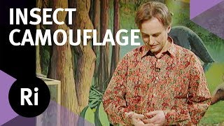 How Stick Insects Use Camouflage - with Richard Dawkins