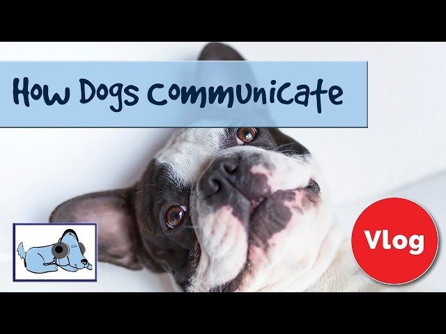 How Dogs Communicate Their Feelings! How to Tell when Your Dog is Happy!